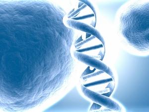Хромосомы ДНК