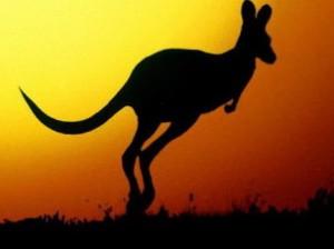 испуганный кенгуру