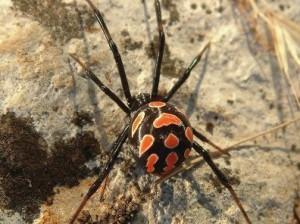 Смертельно опасный паук