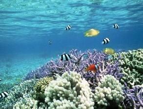 На Карибских островах