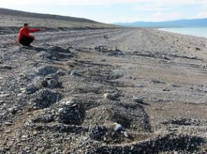В Монголии пытаются разгадать тайну загадочных следов