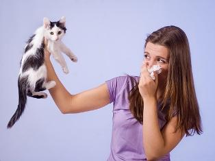 аллергия на кошачью есть