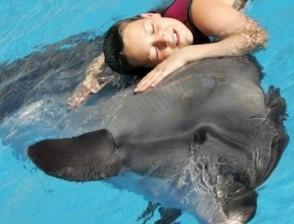 язык дельфинов