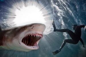 Раненый новозеландский рыбак отбился от акулы ножом, а после пошел пить пиво