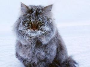 С пятницы в Украину придут 25-градусные морозы