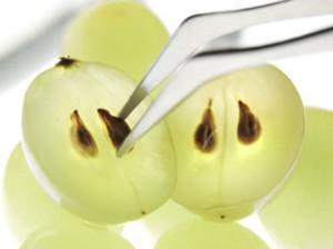 Косточки винограда сохраняют здоровье людей, проходящих химиотерапию