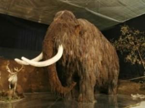 Российские ученые хотят его клонировать мамонта из найденной крови