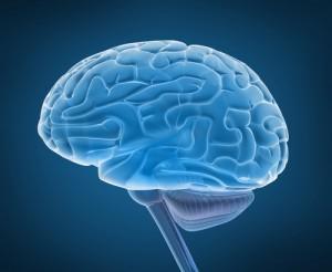 Ученые: диабет уменьшает объем мозга человека
