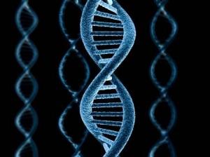 Ученым впервые удалось «отредактировать» ген после мутации