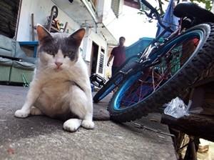 Мужчина зарезал отчима по приказу кошки