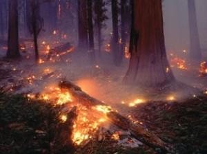 Лесные пожары в штате Вашингтон набирают силу