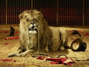 Лев напал на учительницу во время циркового представления