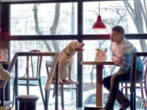 В Калифорнии разрешили ходить в ресторан с собакой