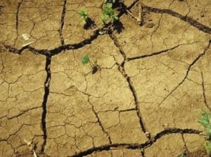 Урожайность на Земле катастрофически снизится к 2050 году
