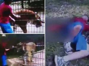 Тигр оторвал руку 11-летнему посетителю зоопарка
