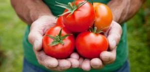 Ученые назвали томаты спасением от рака простаты
