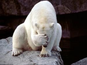 В Африке усыпили последнего белого медведя