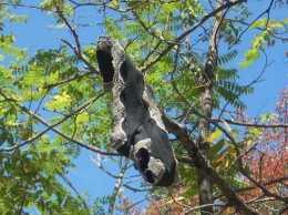 Мистические деревья украли у спящих женщин трусы