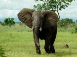 Слоны слышат дождь за тысячи километров