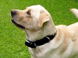 Ученые создали устройство, позволяющее общаться со своим псом дистанционно