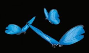 eMotionButterflies_Titel