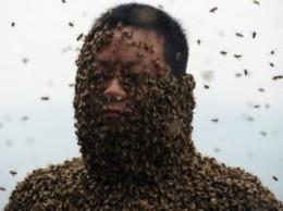 китаец пчелы