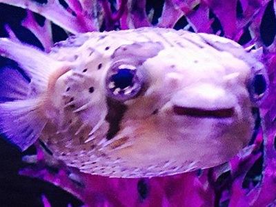 рыба Майли Сайрус