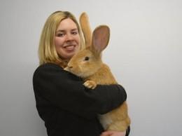 кролик Атлас