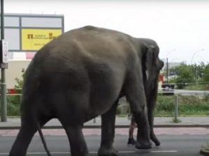 Слониха Майя