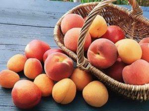 abrikos-i-persik