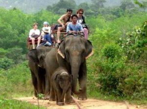 на слонах