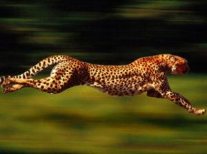 бег животных