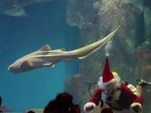 Санта-Клаус в аквариуме