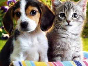 Кошки или собаки