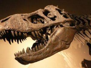 Палеонтология