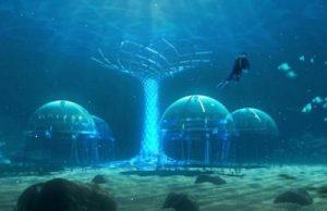 Подводный огород