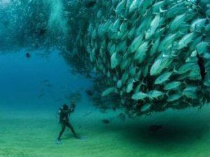 в океане