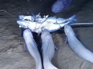 глубоководные