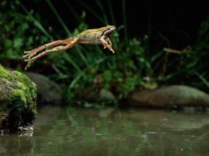 прыжок