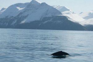 Горбатые киты