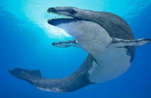 ископаемый кит