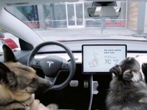 животные в авто