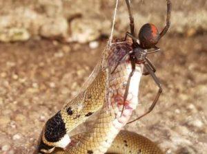 паук и змея