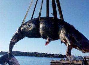 самку кита
